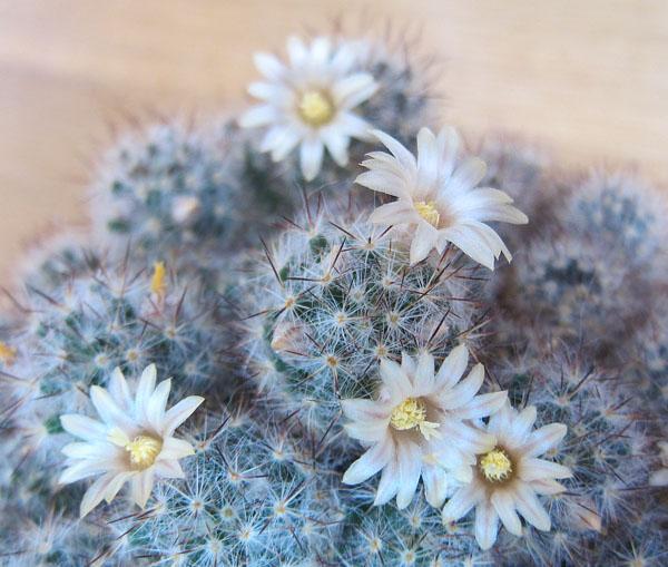 фото заболеваний комнатных растений